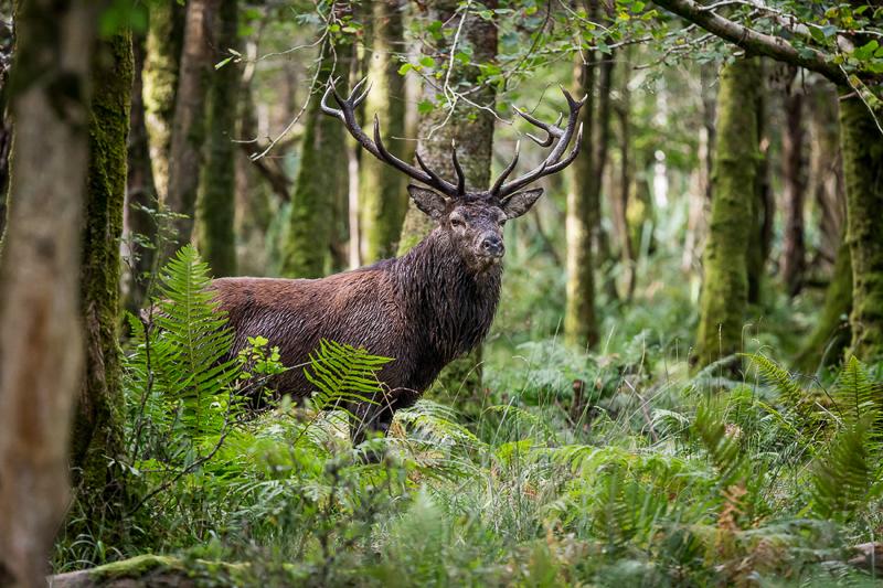 Best Nature - John Tait