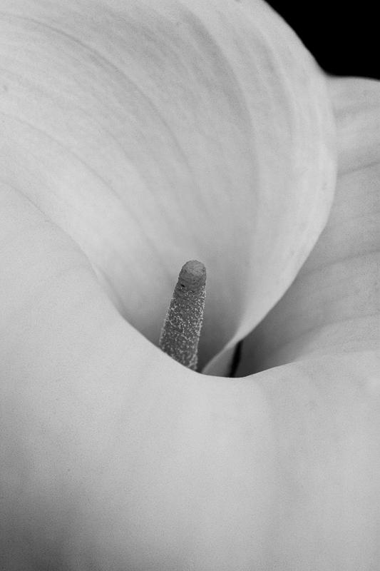 poty 2014 black & white